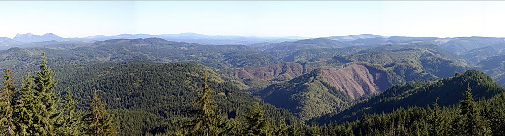 A scene from the Clatsop State Forest.