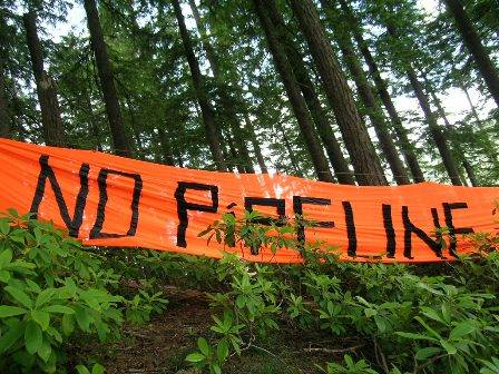 """Photo of \""""No Pipeline\"""" banner in front of coastal forest."""