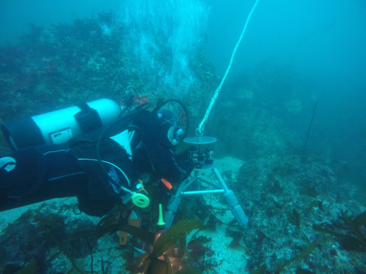 Research diver.  Photo courtesy of ODFW.